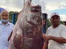 В Малайзии мужчина поймал рыбу весом в 161 кг