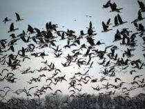 Птиц на Земле оказалось в шесть раз больше, чем людей