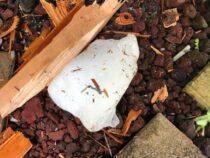 В США крупный кусок льда пробил крышу дома