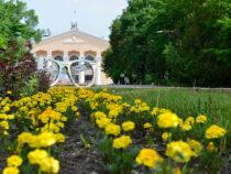 В Бишкеке продолжают высаживать однолетние цветы