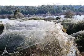 Пауки заплели паутиной почти целый штат в Австралии