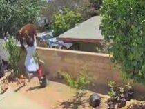 Женщина вытолкала медведя, который хотел залезть к ней во двор