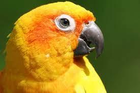 Попугай проглотил 21 бриллиант своих хозяев