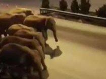 Слоны-беглецы держат в страхе китайский город