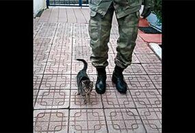 Турецкие военные научили котенка маршировать