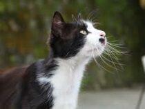 Кошка научилась переводить стрелки часов, чтобы приблизить время ужина