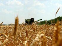 В этом году недобор урожая в Кыргызстане составит 20-25 процентов