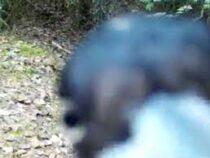 В питерском заповеднике дятел устроил краш-тест для фотоловушки