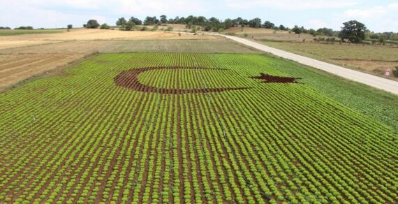 Турция намерена реализовать сельскохозяйственный проект в Баткенской области
