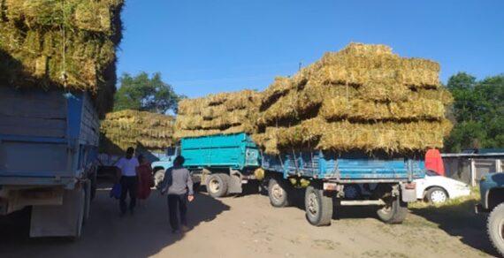 Минсельхоз предложил ввести запрет на вывоз сена, ячменя и пшеницы