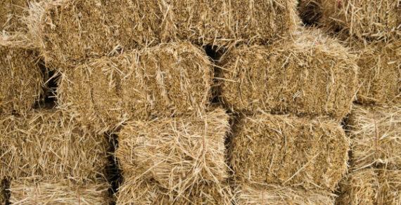 В Кыргызстане резко выросли цены на сено для скота