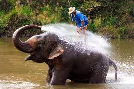 Проблемой для слонёнка стала не река, а её берег