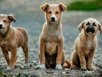 Ученые выяснили, что собаки могут считать не хуже двухлетних детей