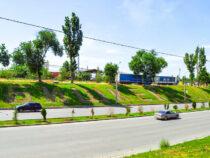 Цветочные композиции украсили газоны вБишкеке