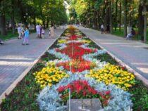 На клумбах столицы появились новые цветочные композиции