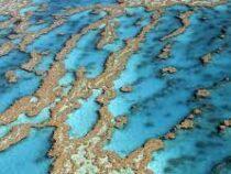 ЮНЕСКО передумала включать Большой Барьерный риф в список объектов всемирного наследия
