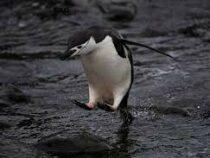 В Антарктике обновился температурный максимум за всю историю наблюдений