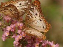 За 30 лет Земля потеряла 75% общей биомассы насекомых