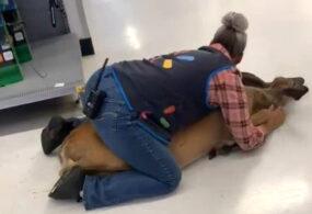 В США сотрудница супермаркета поймала зашедшего в здание оленя