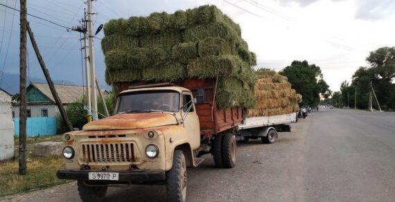 В Панфиловском районе понизились цены на сельхозживотных и корма