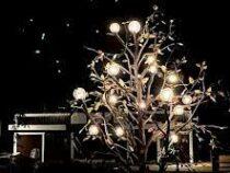 Дерево энергии появилось в бишкекском парке «Ынтымак»