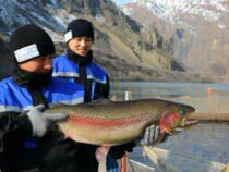 Кыргызстан нарастил экспорт рыбы и рыбных продуктов почти в два раза
