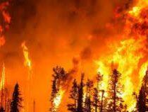 Сильный лесной пожар обесточил греческий остров Родос