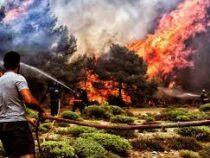 Греческие спасатели продолжают борьбу с лесными пожарами