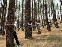 Чемпионат мира по обниманию деревьев пройдет в Финляндии