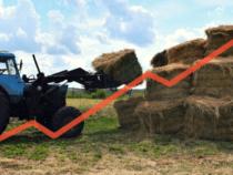 Цены насено выросли до321 сома затюк