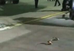 Змее не потребовалось много времени, чтобы проникнуть в самолёт