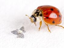 Создан самый маленький летающий девайс