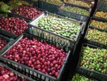 В Джети-Огузском районе начался сезон груш и яблок