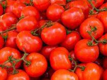 ВЯпонии начали продавать помидоры для гипертоников
