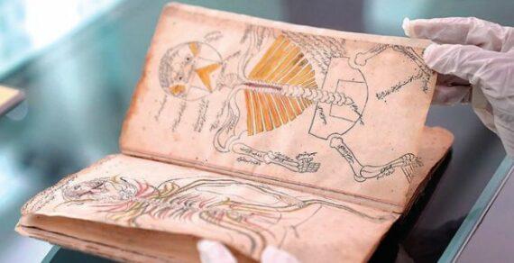 Саудовская библиотека приобрела книгу 14 века по анатомии