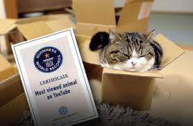 Самый популярный кот в YouTube угодил в Книгу рекордов Гиннеса