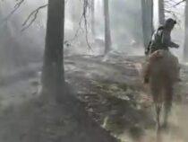 Открытый огонь в лесу в Чон-Кеминской долине потушен
