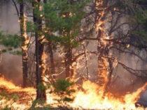Сотни людей тушат пожар в лесу Чон-Кеминской долины