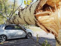 Бишкекчан призывают неоставлять машины под деревьями