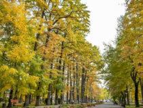 700 деревьев в Бишкеке внесли в электронную базу