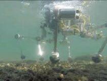 Робот исследует влияние лавы на морских обитателей